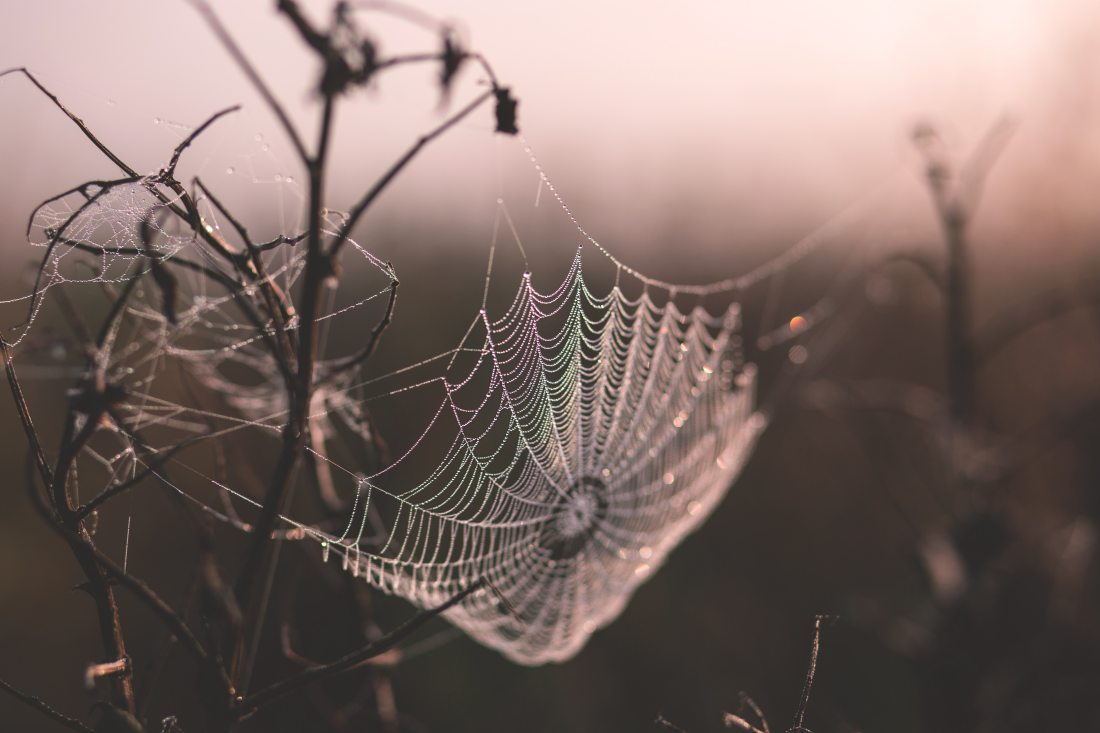 cobweb-depth-of-field-spider-s-web-149224